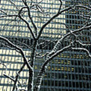 Building Reflection And Tree Art Print