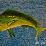 Bull Dolphin Mahimahi Fish Art Print