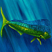 Bull Dolphin Art Print