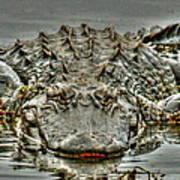 Bull Gator On Watch Art Print