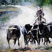 Bull Herd Art Print