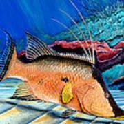 Bull Hogfish Art Print
