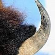 Bull Horn Art Print