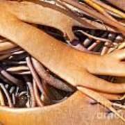 Bull Kelp Blades On Surface Background Texture Art Print