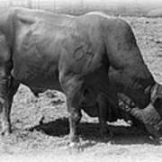Bull Number 07 Art Print by Daniel Hagerman