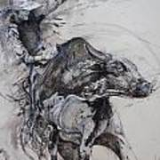 Bull Rider Art Print by Bob Graham