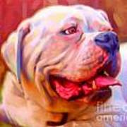Bulldog Portrait Art Print by Iain McDonald