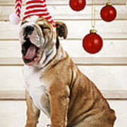 Holiday Bulldog Puppy  Art Print