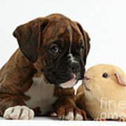Bulldog Puppy With Yellow Guinea Pig Art Print