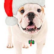Bulldog Santa Art Print