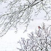 Bullfinch On A Snowy Branch Art Print