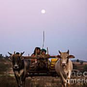 Bullock Cart Under Full Moon - Burma Art Print
