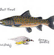 Bulltrout And Grey Ghost Fly Art Print
