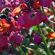 Bumble Bee Among The Wallflowers IIi Art Print