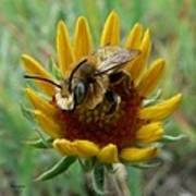 Bumble Bee Beauty Art Print