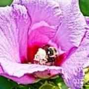 Bumble Bee Iv Art Print