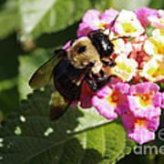 Bumble Bee Art Print