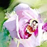 Bumble Bee On Rose Art Print