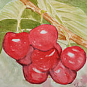 Bunch Of Red Cherries Art Print