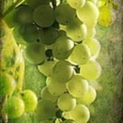 Bunch Of Yellow Grapes Art Print