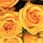 Bunch Of Yellow Roses Art Print