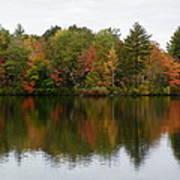 Bunganut Lake Foliage 4 Art Print