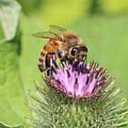 Burdock And Honeybee Art Print