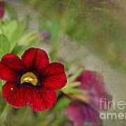 Burgundy Calibrochoa Blank Greeting Card Art Print