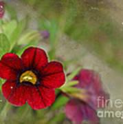 Burgundy Calibrochoa Blank Greeting Card II Art Print