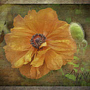 Burnished Poppy Art Print