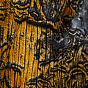 Burnt Beetle Maze  #9991 Art Print
