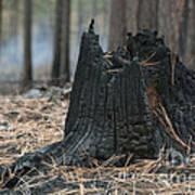 Burnt Tree Trunk Art Print
