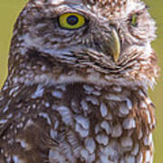 Burrowing Owl 001 Art Print