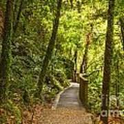 Bush Pathway Waikato New Zealand Art Print