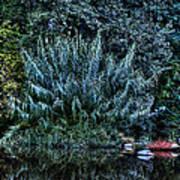 Bush Reflection Art Print