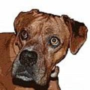 Buster Brown The Boxer Art Print by Sandra Clark