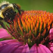 Busy Bumble Bee Art Print by Luke Moore