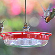 Busy Day At The Feeder Art Print