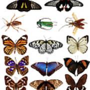 Butterflies And Beetles Art Print