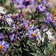 Butterflies And Wildflowers Art Print