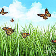 Butterflies In Tall Wet Grass  Art Print