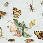 Butterflies Moths And Other Insects With A Sprig Of Apple Blossom Art Print