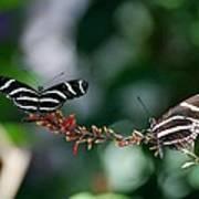 Butterflies On A Wire C Art Print