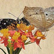 Butterflies Snd Flowers Art Print