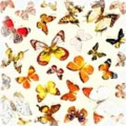 Butterflies Square Art Print