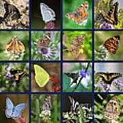 Butterflies Squares Collage Art Print