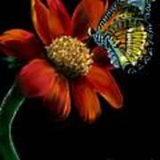 Butterfliy Art Print