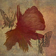 Butterflower Art Print