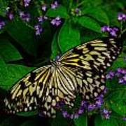 Butterfly - Yellow Green Purple Art Print