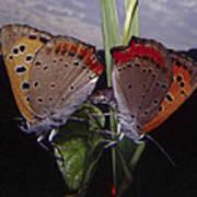 Butterfly 001 Art Print